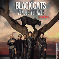 Black Cats - 'Zendegiye Tazeh'